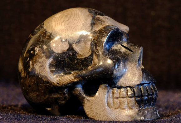 Frosterly marble black, grey & beige mollusc patterened crystal skull