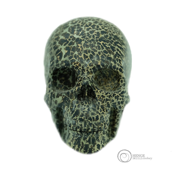 Spotted black and white medium sized skull
