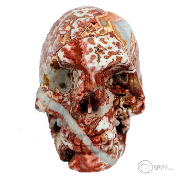 Mixed textures and colours of red, orange , grey and white on large sized human skull