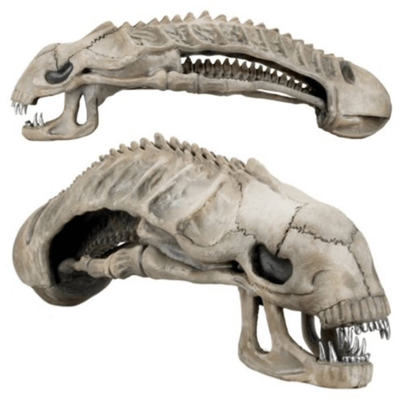 "Lifesize Replica - 36"" Xenomorph Aliens Skull by NECA"
