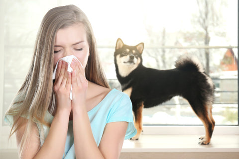 4 Best Dog Breeds for Allergy Sufferers