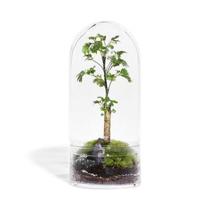 Jungle Rocket Medium - Glass Terrarium Ecosystem