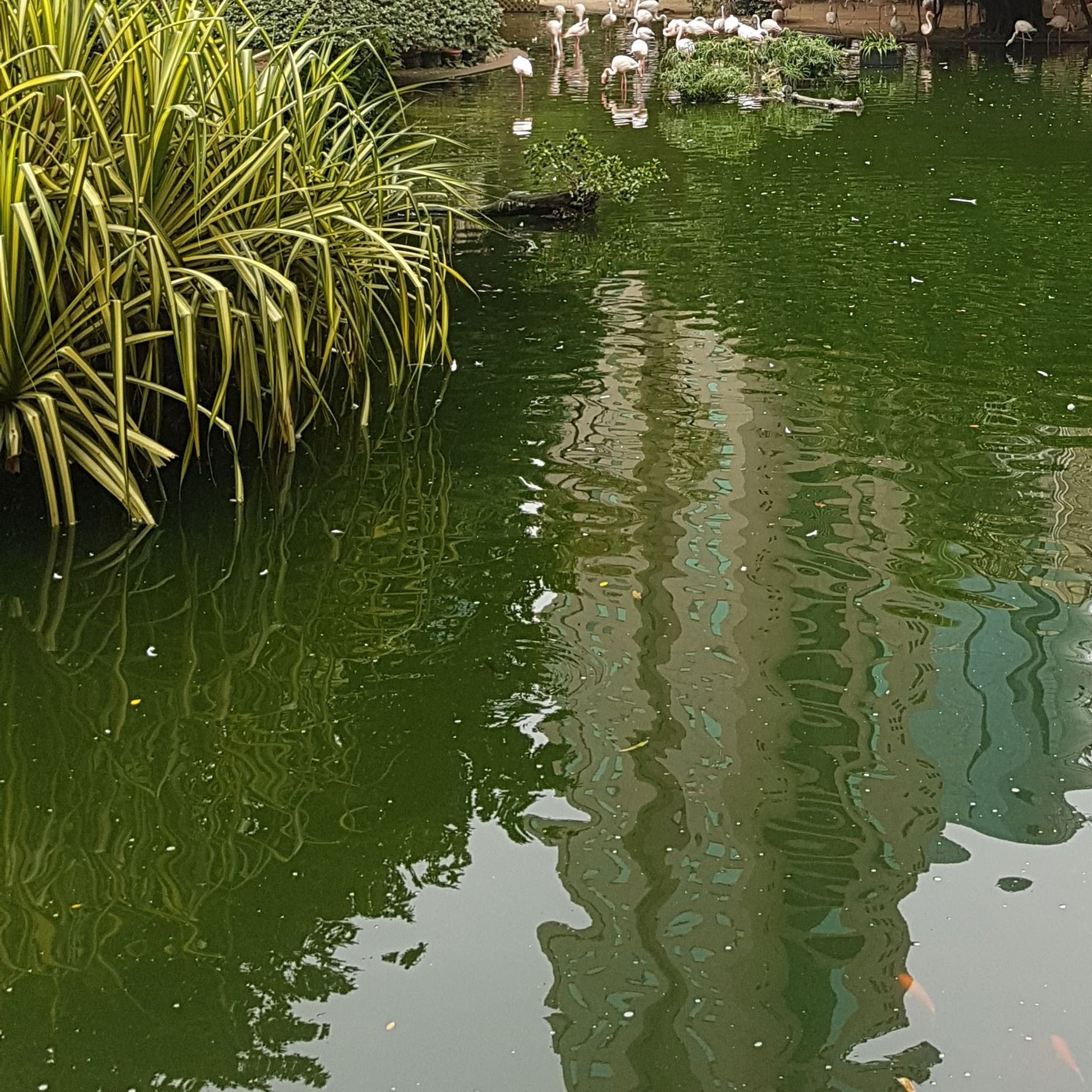 How to Reduce Algae In Your Pond