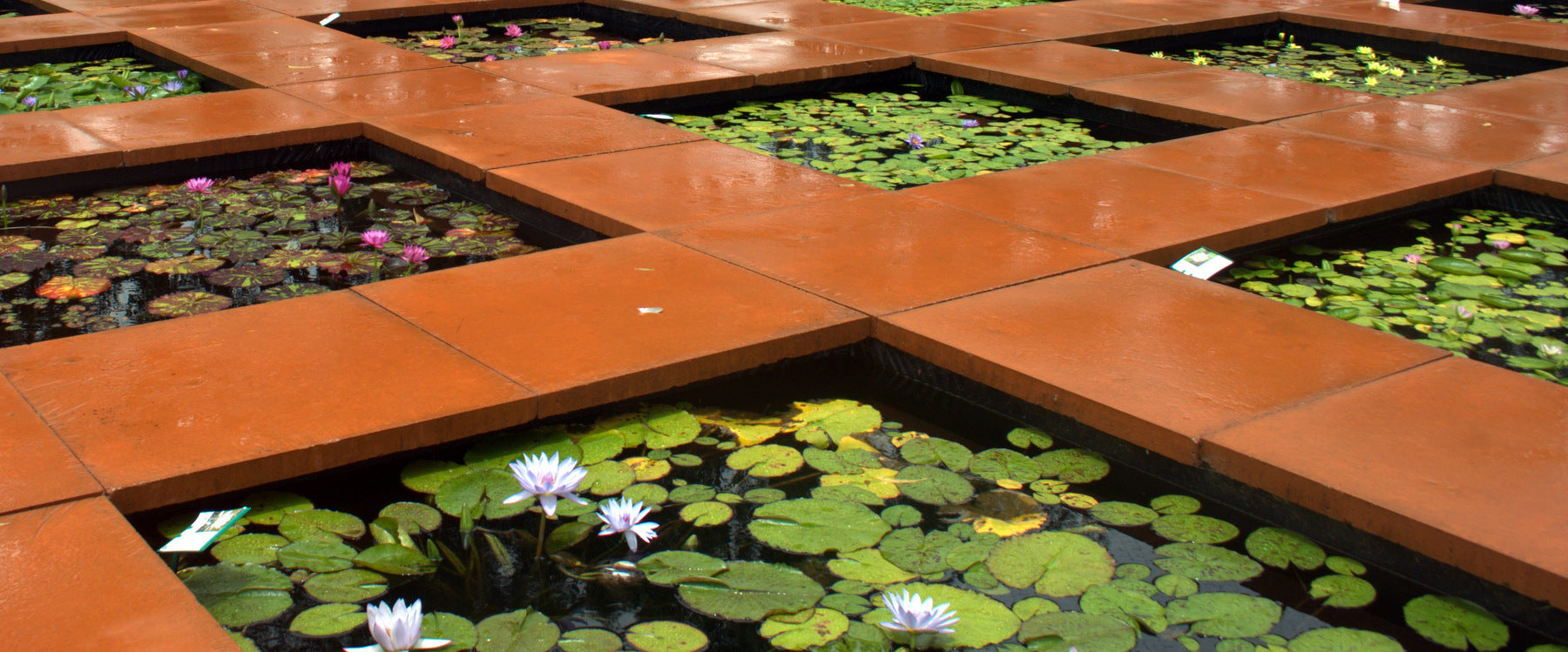 Water Lily Ponds on display at The Lily Farm