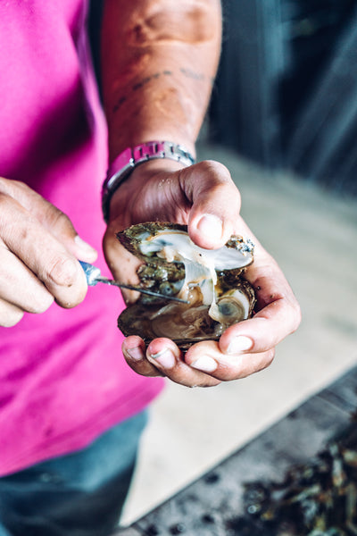 An update from Richard Haward's Oysters