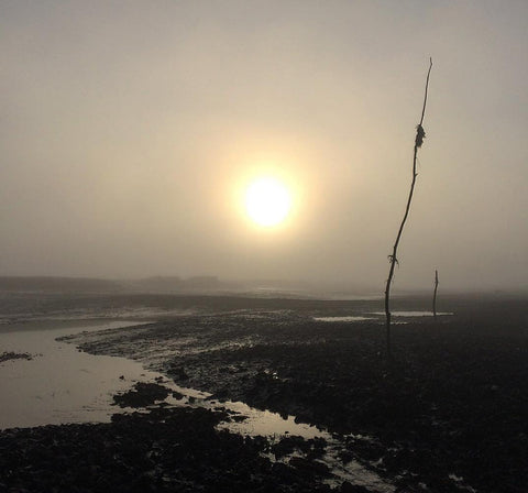 Richard Haward's oysters layings on a misty winter morning.