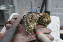 Load image into Gallery viewer, Medium Rock Oyster - Richard Haward's Oysters