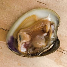 Load image into Gallery viewer, Small Cherrystone Clam - Richard Haward's Oysters