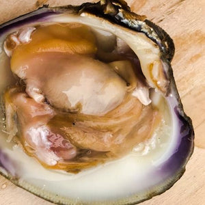 Large Cherrystone Clam - Richard Haward's Oysters