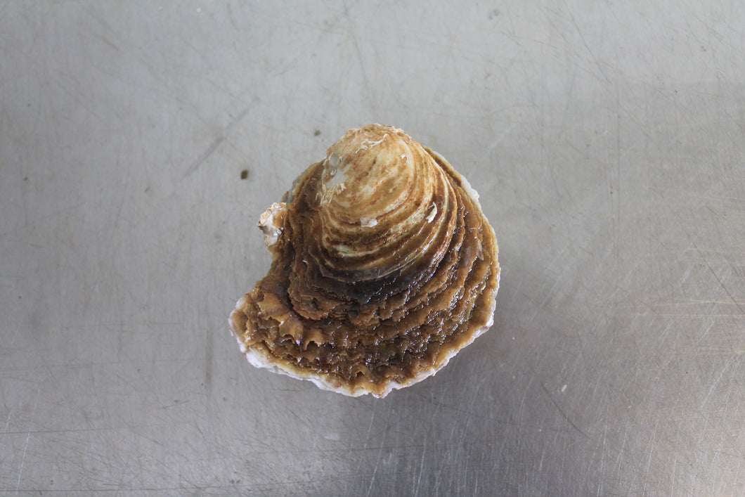 Small Native Oyster - Richard Haward's Oysters