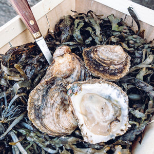 Medium Native Oyster (No. 2/3) - Richard Haward's Oysters