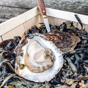 Large Native Oyster (No. 1) - Richard Haward's Oysters
