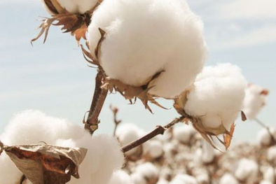 Why choosing organic cotton?