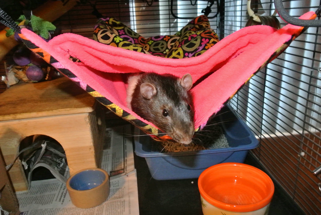 Hide and Peek Hammock