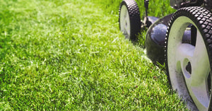 4 fundamentals you must know when caring for your lawn