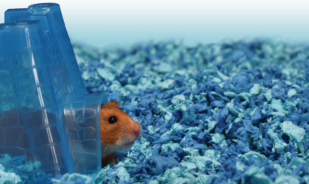 How To Choose The Best Small Animal Bedding For Your Hamster