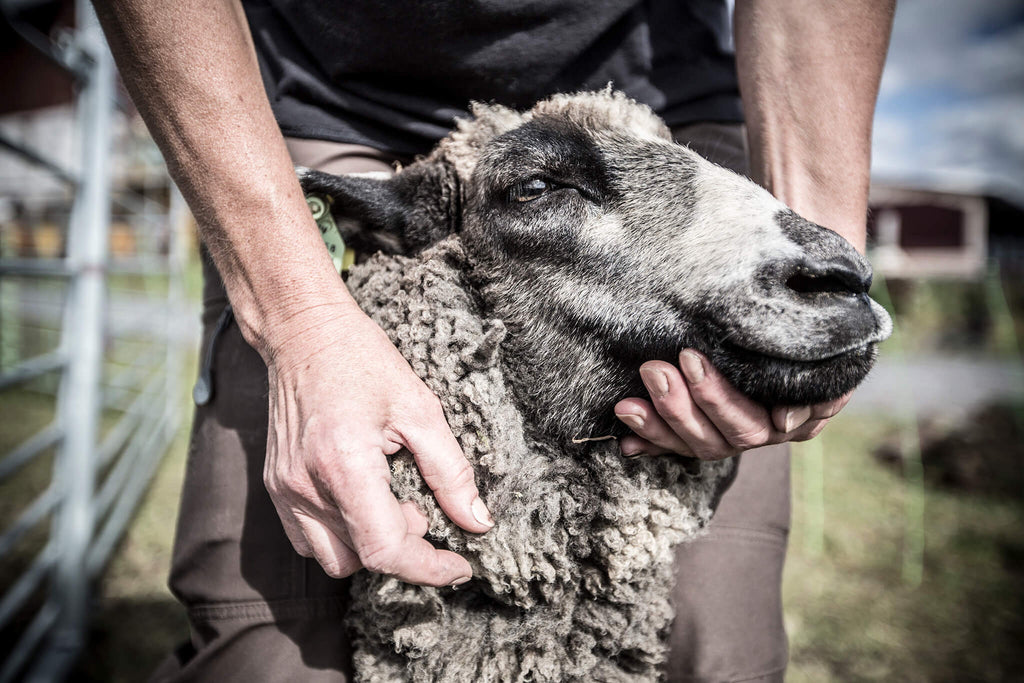Ann Rudsby, one of our farmers, with one of her beloved grey sheep