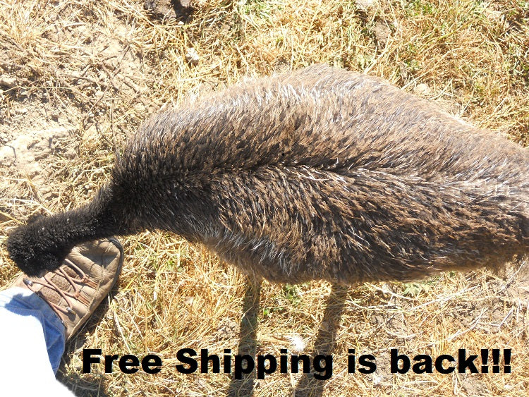 Free Shipping Extended...