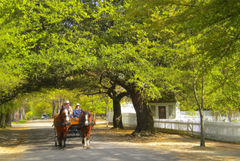 elderly-travel-destination-Williamsburg-Virginia