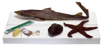 Marine Dissecting Lab Basic