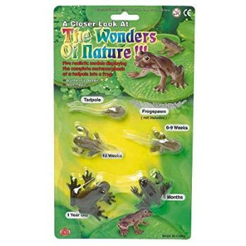 The Wonders of Nature Frog Life Cycle