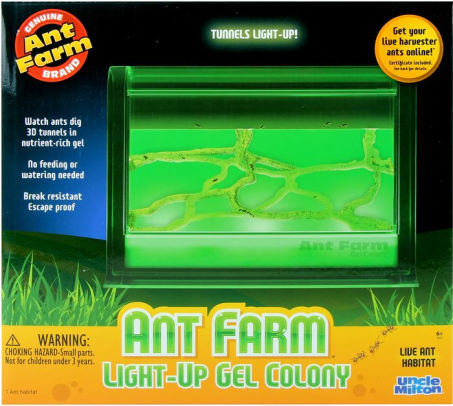 Gel Ant Farm LED Lit