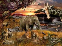 Animal Planet/African, 100pc