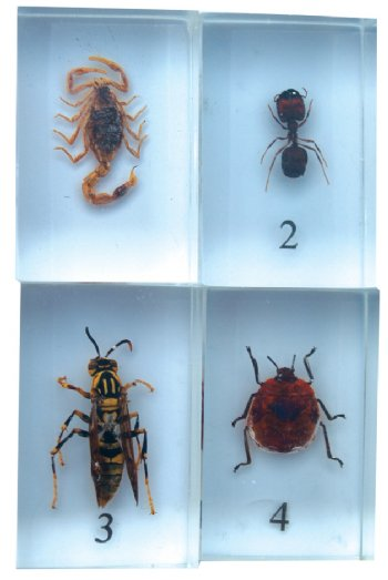 Bug Blocks-scorpion, ant, wasp