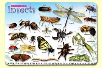 Bugs, Insects & Arachnids- mat