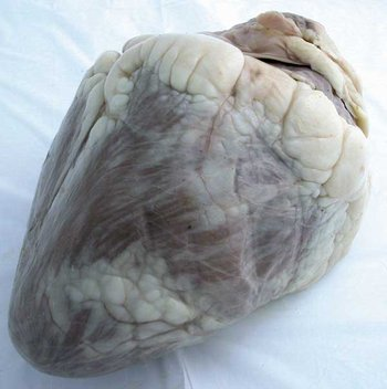 Cow Heart (1lb 8 oz)