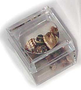 Acrylic Mag. Box w/Shells