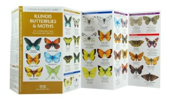 Pkt Nat: IL Butterflies & Moths