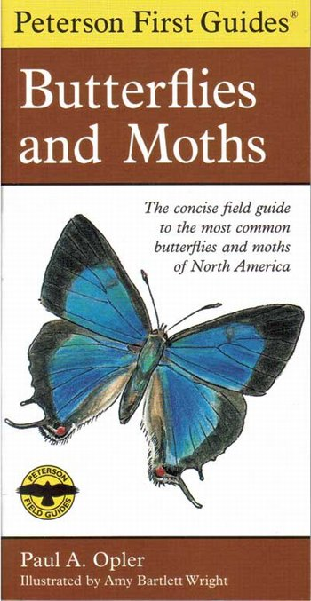 Butterflies & Moths 1st Guide
