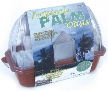 DISCONTINUED Tropical Palm