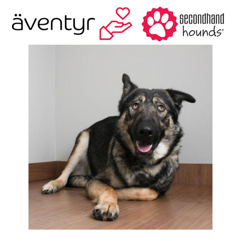 äventyr bicycle bags sponsors Secondhand Hounds rescue Genie