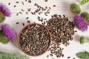 6 Reasons Why You Need Milk Thistle in Your Life