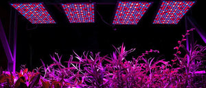 Best LED Grow Lights 2019