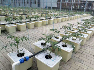 ECO Farm Ebb & Flow Drip Irrigation Hydroponic System-growpackage.com