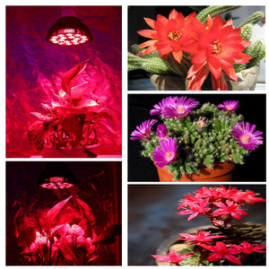 Niello 36W LED Grow Light Bulb