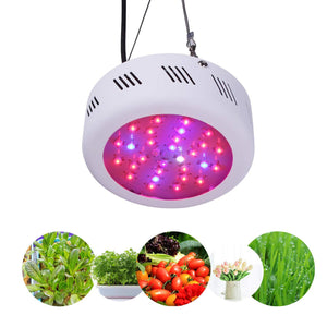 Roleadro 135/300/600W LED Grow Light