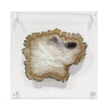 Load image into Gallery viewer, Petrified Wood Acrylic Wall Decor