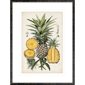 Pineapple Botanical Study I