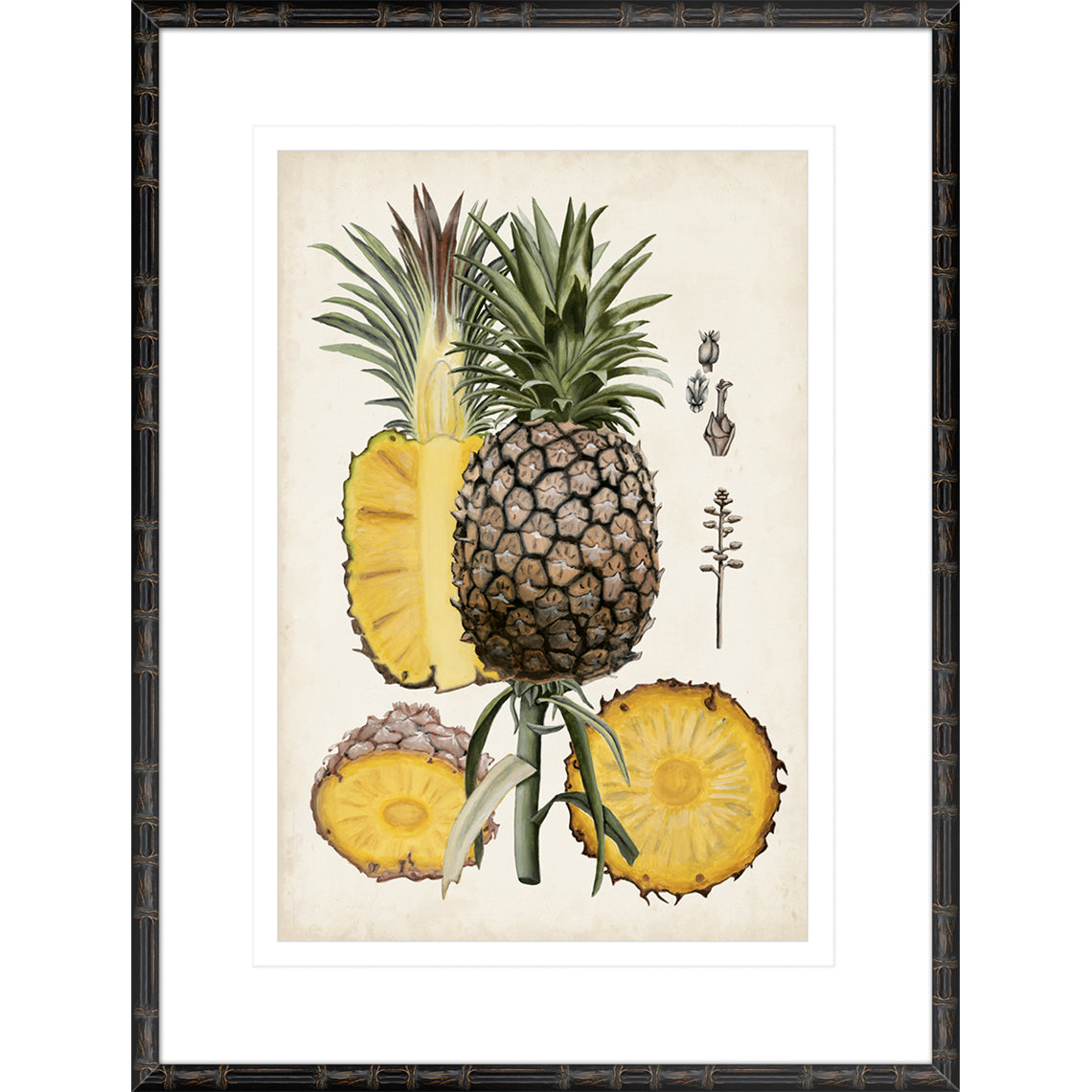 Pineapple Botanical Study II