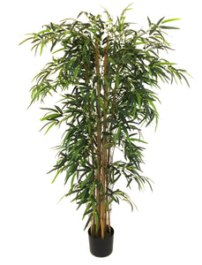 Tall Bamboo Tree