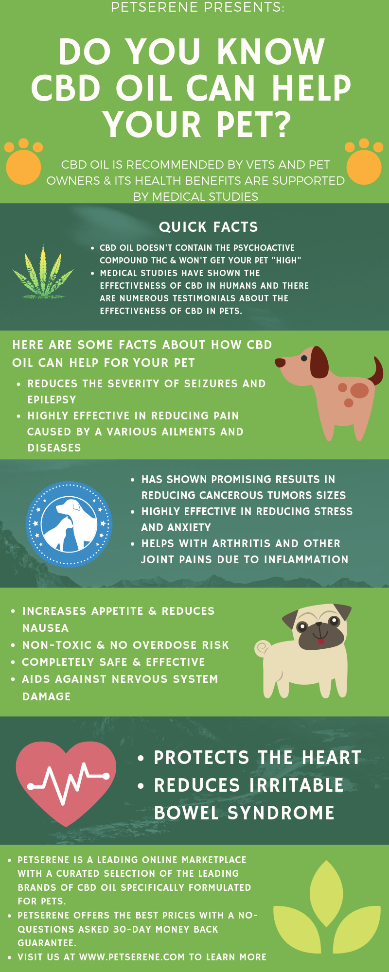 how cbd oil can help your dog