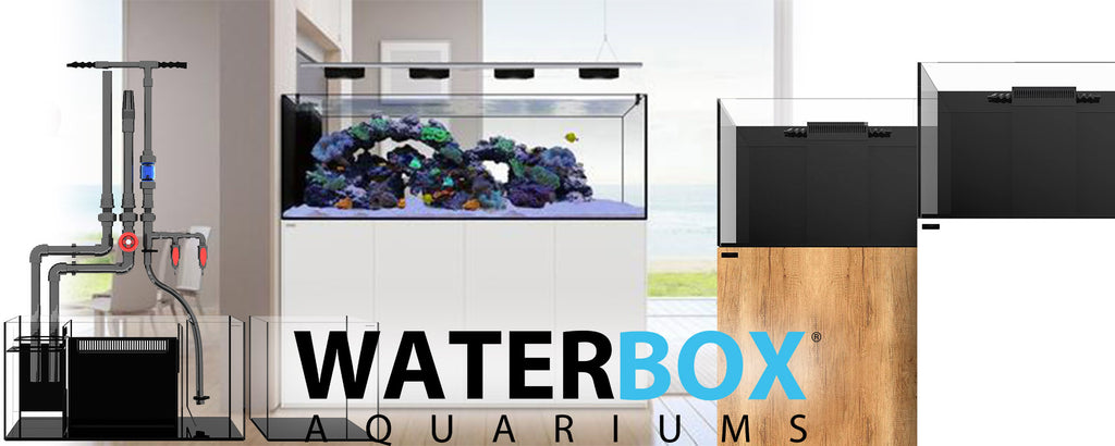 Waterbox : ces aquariums designs que les aquariophiles s'arrachent !
