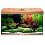 AQUAVIE StartUp 60 - Aquarium Hêtre Rectangle tout équipé 54L