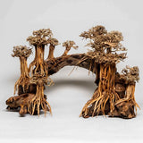 Layout-Bridge-aquadeco-sculpture-bois-aquascaping