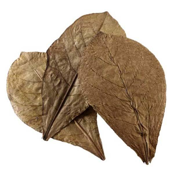 catappa-leaves-xl-hobby-feuilles-de-catappa-pour-conditionner-l-eau-de-l-aquarium-naturellement