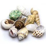 hobby-sea-shell-set-10-pcs-coquillages-aquarium